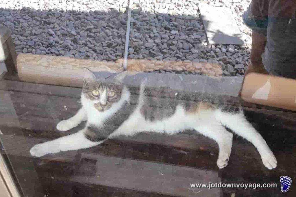 「菁桐車站」:台鐵TRA平溪線終點站;櫥窗台裡的貓