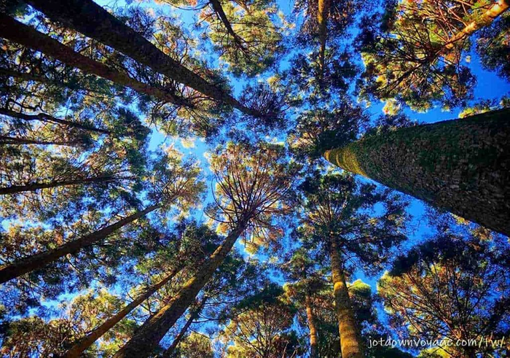 加里山超美森林