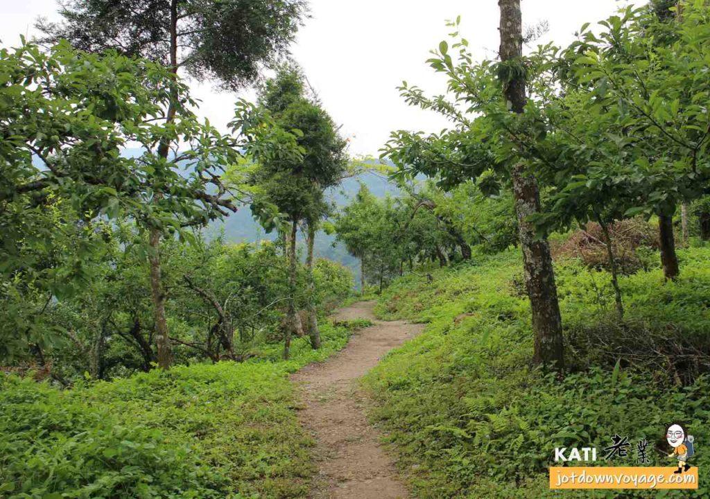 果園:珠湖登山口、細道邦山步道、馬那邦山登山步道