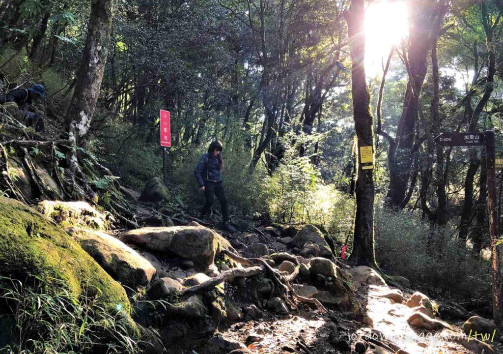 小百岳#34 加里山登山步道紀錄|遊記|推薦.台灣秋冬一日遊登山路線