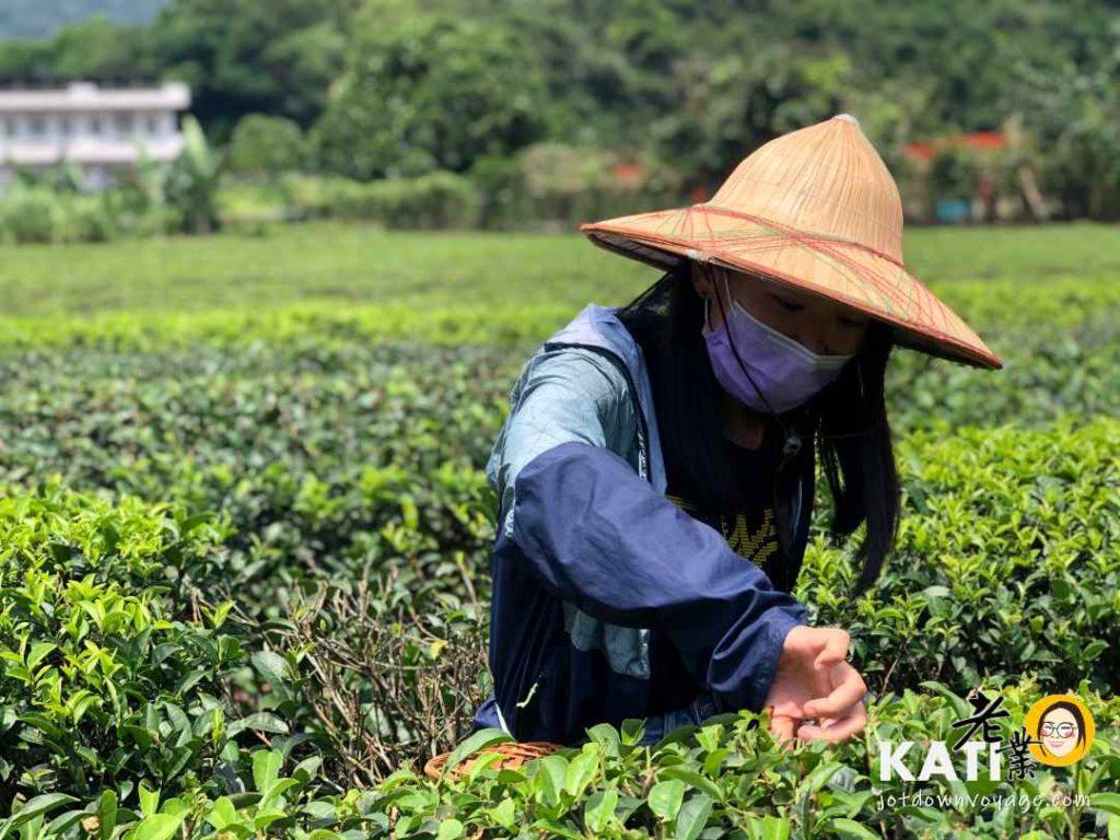 台灣旅行推薦 宜蘭茶園採茶體驗 台灣傳統製茶工藝傳承