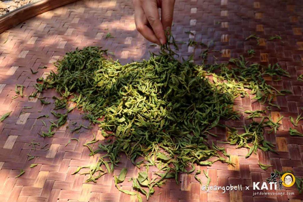 宜蘭冬山正福茶園 採茶體驗