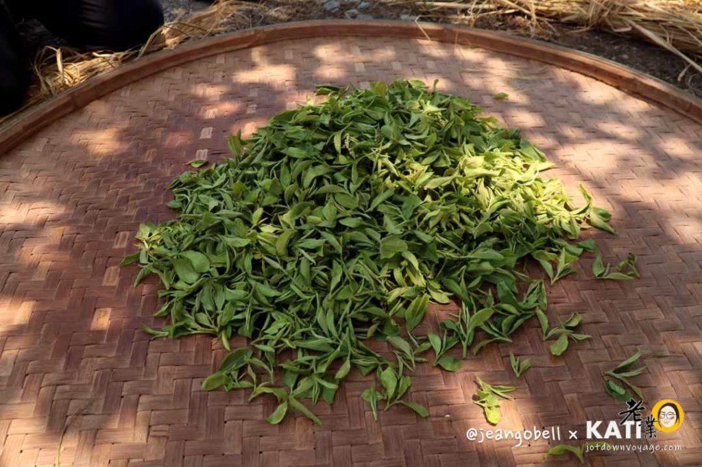 宜蘭正福茶園:手工揉茶體驗