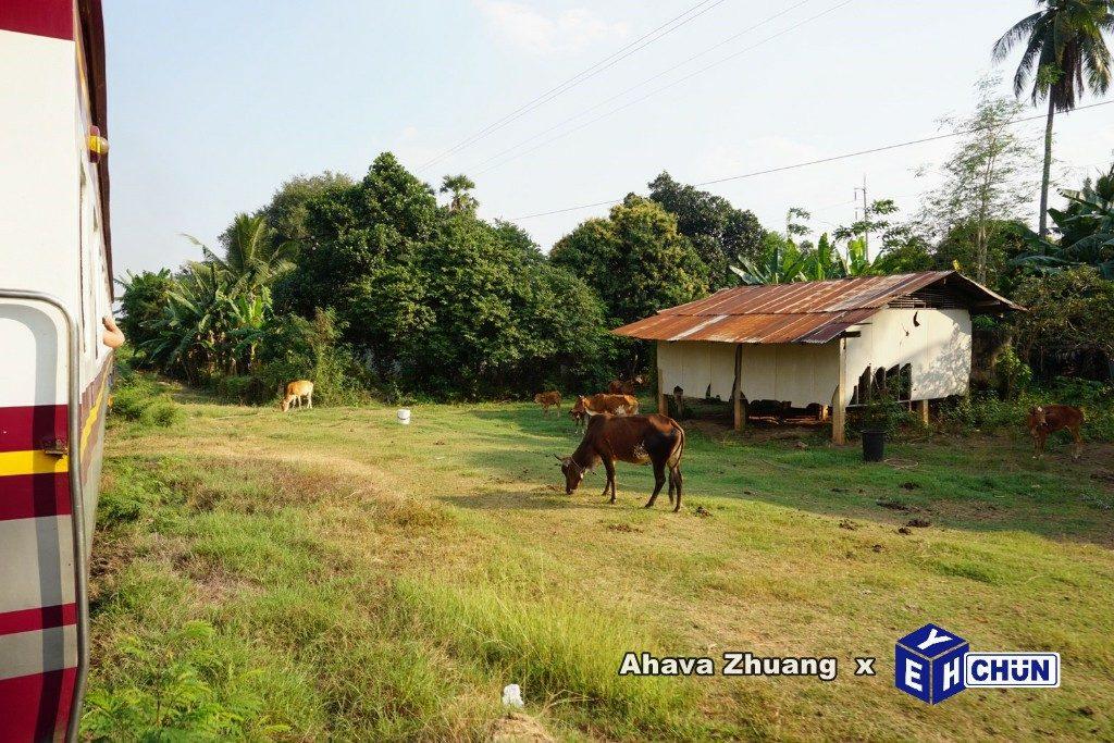 2019 泰國遊記:Kanchanaburi 北碧府一日遊、泰緬鐵路、死亡鐵路經典段