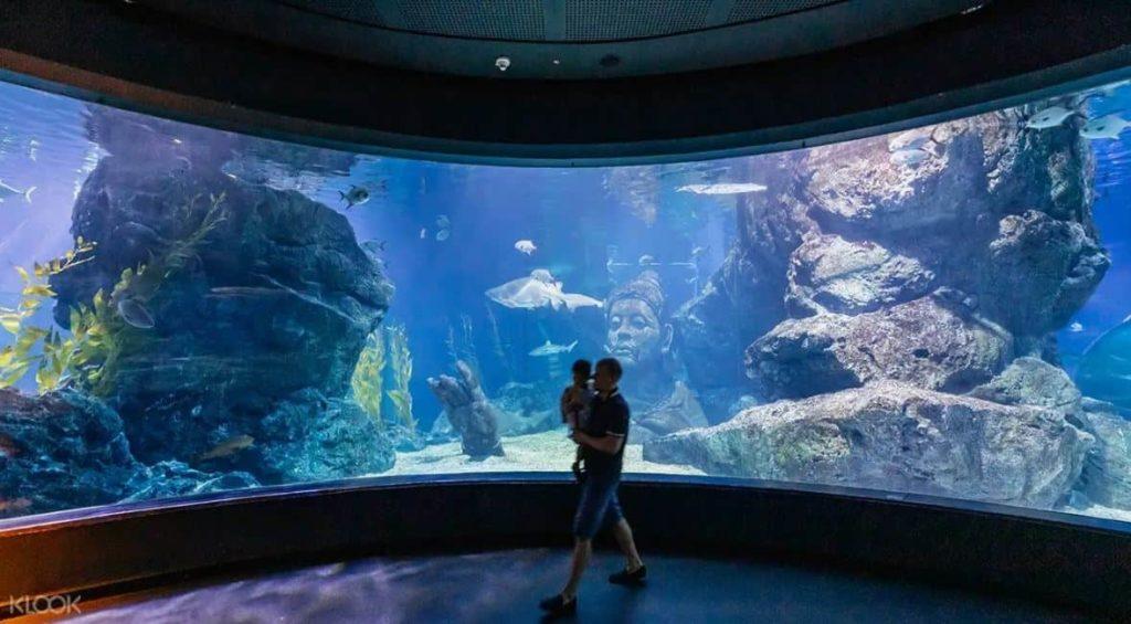 2019 泰國自由行,曼谷 24 個超人氣必去景點推薦《新手全攻略》:Siam Paragon 暹羅海洋世界水族館