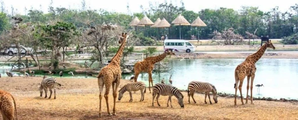 2019 泰國自由行,曼谷 24 個超人氣必去景點推薦《新手全攻略》:Safari World Bangkok 賽佛瑞野生動物園