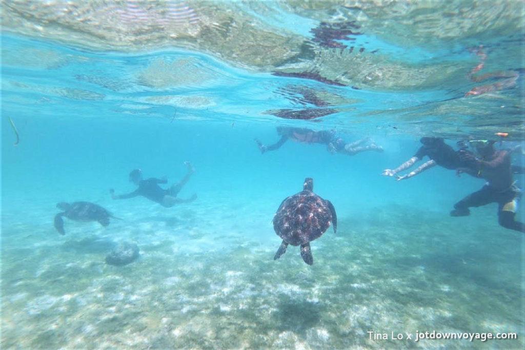 Philippines 巴斯卡多島浮潛、沙丁魚風暴、海龜棲息區一日遊 菲律賓旅遊SIM卡吃到飽推薦