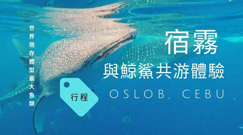 【2019 宿霧自由行】KKday賞鯨鯊行程和評價怎麼樣?我們到Oslob的體驗心得